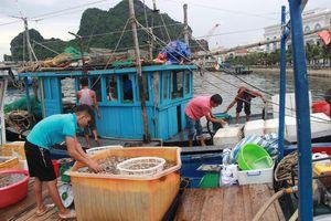 Quảng Ninh cấm biển, dừng tàu tham quan vịnh Hạ Long ứng phó bão