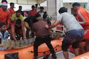Cá sấu tràn vào đường phố ngập lụt ở Ấn Độ, gây khiếp đảm