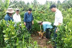 Truy tìm 'con vật lạ' cắn phá vườn dừa của người dân