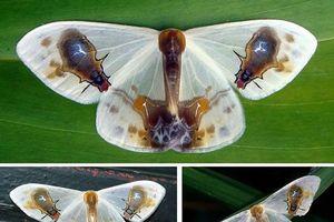 Đẳng cấp loài bướm vẽ luôn cái chết của mình lên cánh ngụy trang