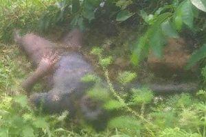 Quảng Ninh: Làm rõ vụ người dân phát hiện thi thể nam giới trên đầm