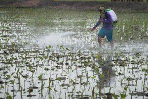 Thái Lan cấm sử dụng ba hóa chất diệt cỏ trong nông nghiệp