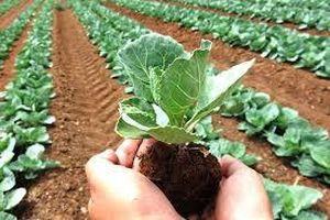 Ứng dụng chế phẩm vi sinh xử lý phụ phẩm nông nghiệp
