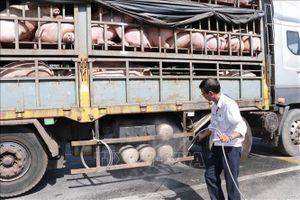 4.500 con lợn được vận chuyển mỗi ngày qua trạm kiểm dịch Ông Đồn ra Bắc