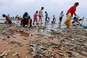 Sau siêu bão Lekima, hàu phủ kín bãi biển tỉnh Sơn Đông, Trung Quốc