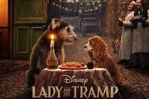 'Lady and the Tramp' tung trailer giới thiệu hình ảnh đầu tiên về bản live-action chuyện tình lãng mạn của Disney