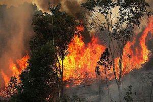 Cháy rừng Amazon: Cứ mỗi phút trôi qua, diện tích rừng ngang 3 sân bóng bị thiêu rụi