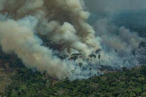 Rừng Amazon cứ giãy giụa kêu cứu trong tuyệt vọng trước lòng tham của con người