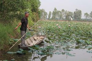 ĐBSCL nghiên cứu trữ nước liên vùng, gắn với sinh kế người dân