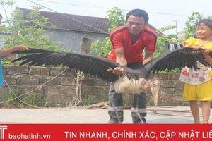 Bàn giao chú chim lạ 'khổng lồ' cho lực lượng chức năng