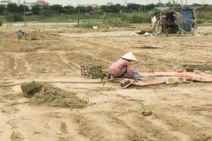 Làng rau kiệt quệ, khốn đốn vì sông nhiễm mặn, dân bỏ ruộng đổi nghề