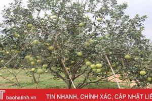 Hàng ngàn ha cam, bưởi ở Hà Tĩnh đối mặt với nguy cơ thất thu do bão số 4