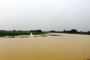 Thanh Hóa: Thiệt hại nặng nề trong cơn bão số 4