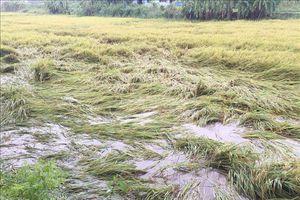 Thừa Thiên - Huế tập trung khắc phục thiệt hại do áp thấp nhiệt đới