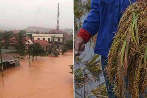 Ngập lụt ở miền Trung: Nhà chìm trong nước, lúa chưa gặt đã nảy mầm