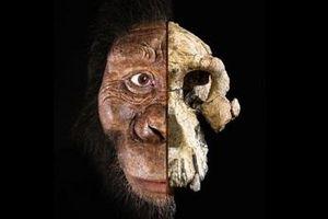 Tìm thấy khuôn mặt tổ tiên lâu đời nhất của loài người