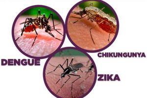 Cuba nỗ lực ngăn chặn các bệnh lây qua muỗi