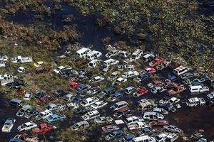 Ảnh trong tuần: Hàng trăm ô tô bị cuốn như đồ chơi trong siêu bão Dorian