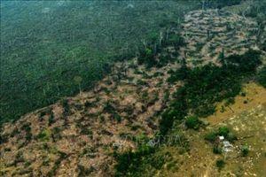 Tình trạng phá rừng Amazon tăng tháng thứ tư liên tiếp