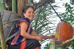 Kỳ lạ, cây dừa cho rượu như sâm banh, có khách lấy chục lít mời nhậu