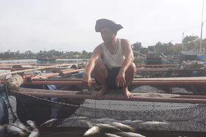 Hàng trăm tấn thủy sản chết trắng lồng bè, người dân điêu đứng