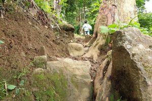 Đường lên ngôi trường chỉ có 2 cô giáo, 34 học sinh: Bên này vách núi, bên kia vực thẳm