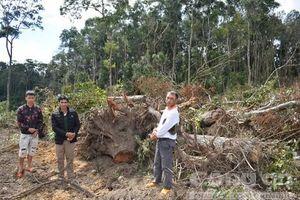 Lâm Đồng lại phát hiện vụ phá hơn 2 ha rừng, bắt 3 đối tượng