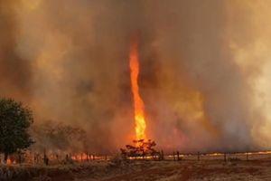 Vòi rồng lửa siêu hiếm quét qua trang trại ở Brazil