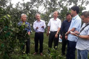 Vùng quả ngọt giúp người dân Phổ Yên làm giàu