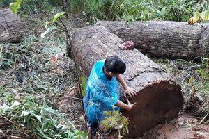 Kon Tum: Lật xe chở gỗ, một người đàn ông tử vong