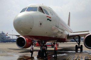 Máy bay Air India bị hoãn trong nhiều giờ vì một đàn ong