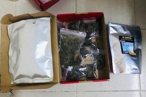 Tạm giữ 2 sinh viên buôn bán ma túy với gần 1,5 kg cần sa