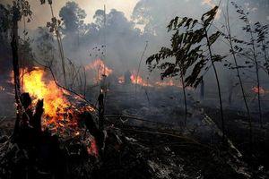 Băng đảng tội phạm đứng sau các vụ cháy rừng Amazon?
