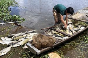 Cá nuôi trên sông Đại Giang chết hàng loạt do ngộp thở