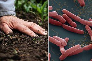 Vi khuẩn ăn thịt người 'thịt' bao người, lây như nào?