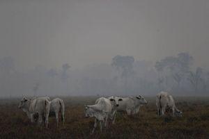 230 quỹ tài chính hối thúc các công ty bảo vệ rừng Amazon