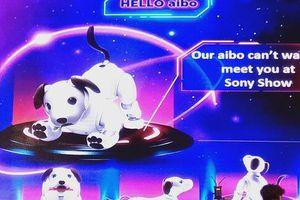 Chó thông minh Aibo sử dụng trí tuệ nhân tạo