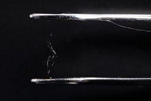 Phát hiện mới: Gỗ và tơ nhện có thể trở thành vật liệu của tương lai