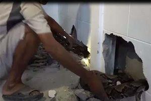 Đập tường bắt trăn khổng lồ chui vào nhà dân