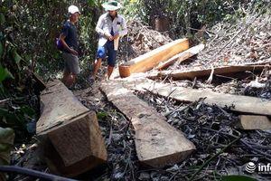 Những con số 'vênh nhau' trong vụ phá rừng đầu nguồn ở Thanh Hóa