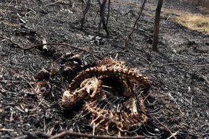 Tin tức thế giới 26/9: Cháy rừng thiêu chết hàng triệu động vật hoang dã tại Bolivia