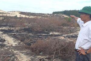 Chủ tịch tỉnh Bình Định chỉ đạo làm rõ vụ hàng trăm héc ta rừng dương bị 'khai tử'