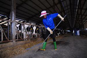 Xuất khẩu sữa chính ngạch: Mộc Châu đã sẵn sàng