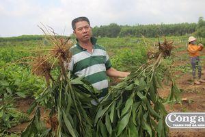 Xã tự ý 'bứng gốc' hàng ngàn cây keo: Người dân không đồng ý hỗ trợ 4 ngàn đồng/1 cây keo