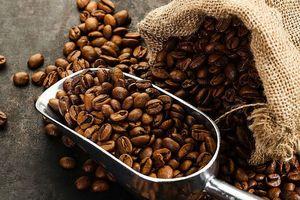 Giá cà phê hôm nay 4/10: Hồi phục mạnh về mức 33.500 đồng/kg