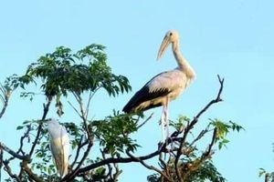 Huyền tích đảo Cò Chi Lăng Nam và… bí quyết giữ chân chim trời