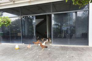 Biệt thự chục tỷ tại khu đô thị của Kiến Á chỉ để... nuôi gà