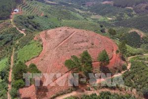 Điều tra vụ phá rừng thông 20 năm tuổi tại Lâm Hà