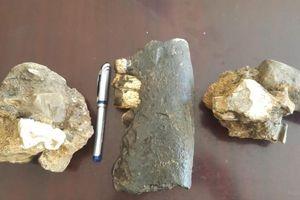 Phát hiện hóa thạch tê giác trong hang động Phong Nha - Kẻ Bàng