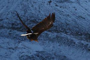 Đại bàng mang máy quay 360 độ ghi cảnh sông băng chết dần trên Alps